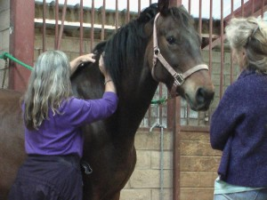 Kathryn Shanti Ariel assisting JR (horse) to release body imbalances from leg injury